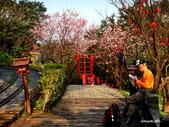 104/03/03 金瓜石_金東坑、金西坑古道:DSCN3607.JPG