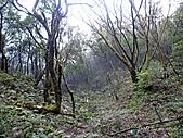 滿月圓檜谷線上多崖山:P1080960.jpg