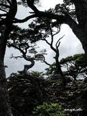 102/06/21~23 武陵二秀池有品田植物:DSC_3672.JPG