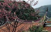 104/02/08 金瓜石_石尾古道、黃金神社、百二崁古道:DSC_0106.jpg