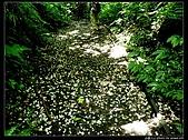 白雞三山:白雞山、雞罩山、鹿窟尖:P1000550o.jpg