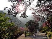 104/03/03 金瓜石_金東坑、金西坑古道:DSCN3600.JPG