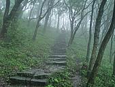 陽明山三池-向天池,七星池,夢幻湖:IMGP1906.jpg