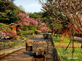 104/03/03 金瓜石_金東坑、金西坑古道:DSCN3619.JPG