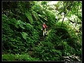 白雞三山:白雞山、雞罩山、鹿窟尖:P1000552.JPG