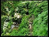 白雞三山:白雞山、雞罩山、鹿窟尖:P1000553.jpg