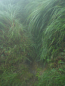 陽明山三池-向天池,七星池,夢幻湖:IMGP1918.jpg