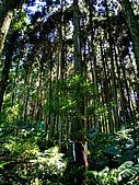 關西鳥嘴山:IMGP2592.jpg
