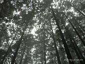 滿月圓檜谷線上多崖山:P1080870.JPG