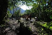 2010/01/10錐麓古道  斷崖駐在所—錐麓斷崖—巴達岡:DSC_9663.JPG