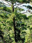 三義三角山,雙峰山,銅鑼員屯山:IMGP2281.jpg