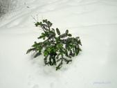 100/12/17 溫哥華CYPRESS雪地健行(Snowshoeing at Cypress):P1010483.jpg