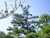 三義三角山,雙峰山,銅鑼員屯山:IMGP2282.jpg