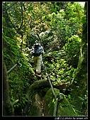 白雞三山:白雞山、雞罩山、鹿窟尖:P1000561.jpg