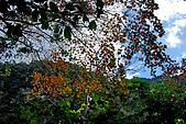 2010/01/10錐麓古道  斷崖駐在所—錐麓斷崖—巴達岡:DSC_9805.jpg
