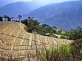 南山神木、米羅山:IMGP2176.jpg