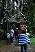 2009/12/21 馬來西亞-神山波令温泉-樹頂吊橋 :DSC_8545.JPG