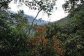 2010/01/10錐麓古道  斷崖駐在所—錐麓斷崖—巴達岡:DSC_9768.jpg
