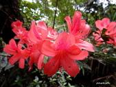 104/04/03 雙溪_蝙蝠山、苕谷瀑布、苕谷坑山:DSCN4872.jpg