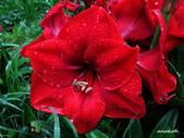 102/05/03~05 雪山主東北稜角植物(四):IMG_8237.JPG