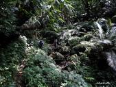 104/04/03 雙溪_蝙蝠山、苕谷瀑布、苕谷坑山:DSCN4990.jpg