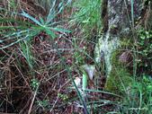 102/05/03~05 雪山主東北稜角植物(四):IMG_8252.JPG
