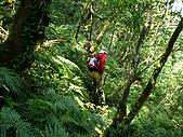 南山神木、米羅山:IMGP2193.jpg