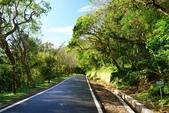 竹子湖:中正山產業道路