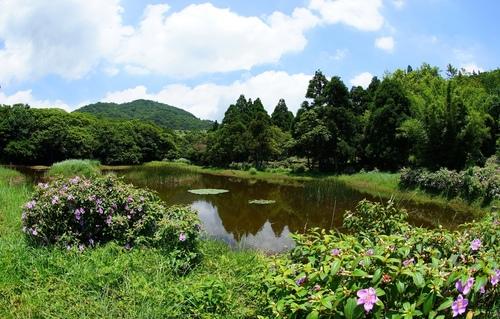 冷水坑生態池 - 陽明山遊園景點