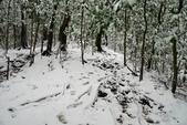 陽明山賞雪2016/01/24:苗圃山路