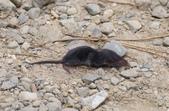 錢鼠:錢鼠