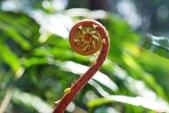 陽明山的蕨類(ㄧ):烏毛蕨