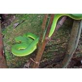 蛇類(2016):相簿封面