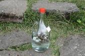 虎頭蜂:黑尾虎頭蜂泡酒