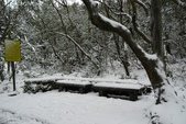 陽明山賞雪2016/01/24:苗圃步道