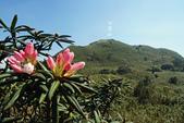 七星山的玉山杜鵑:七星山&玉山杜鵑