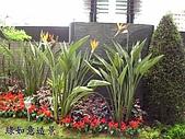 庭園造景園藝花卉規劃設計施工:天堂鳥.jpg