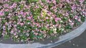 2014台南公園百花季:11-73F5348F-1596929-960.jpg