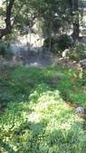 2014台南公園百花季:11-6662F1E3-2027670-960.jpg