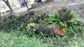 2014台南公園百花季:12-1A19CA2F-1950149-960.jpg