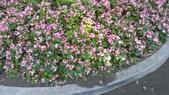 2014台南公園百花季:12-73F5348F-1596929-960.jpg