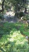 2014台南公園百花季:12-6662F1E3-2027670-960.jpg