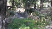 2014台南公園百花季:12-C03E5C45-2042252-960.jpg