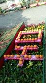 2014台南公園百花季:1391912915132.jpg