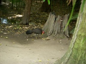 2007.10.07 AUSTRALIA ZOO:1643780243.jpg