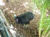2007.10.07 AUSTRALIA ZOO:1643780246.jpg