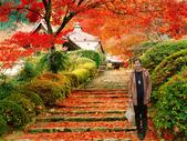 photoshop作品:橘紅綻放.jpg