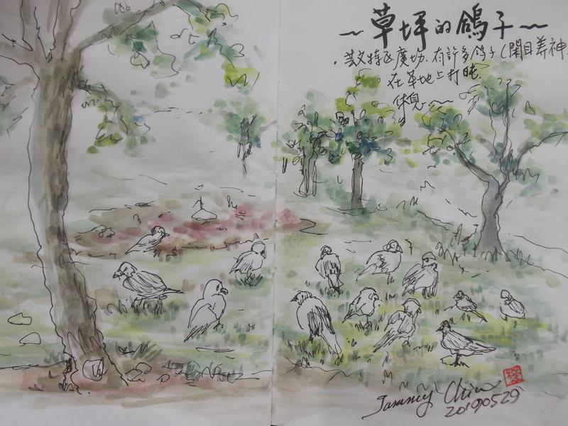 2019 每日一畫 / 生活速寫【4至6月】:20190529 淡彩 / 廣場草坪的鴿子
