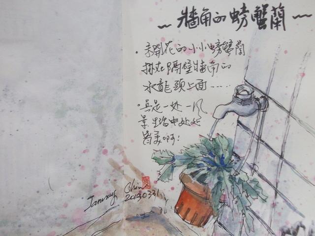 20190331 淡彩 / 牆角螃蟹蘭 - 2019每日一畫 / 生活速寫【1至3月】