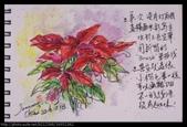 我手繪的耶誕卡。與名片。卡片:生活速寫 / 淡彩手繪聖誕紅